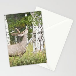 Aspen Nibbler Stationery Cards
