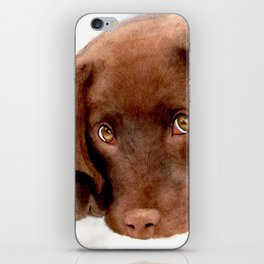 Chocolate Lab Puppy iPhone Skin