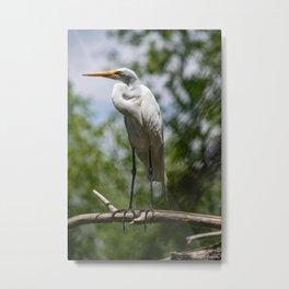 Great Egret - Utah Metal Print