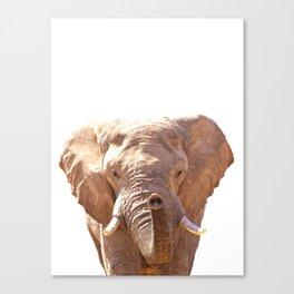 Elephant illustration Canvas Print
