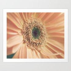daisy 011 Art Print
