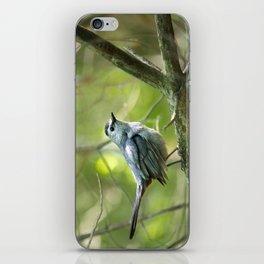 Forest Bird iPhone Skin