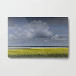 Yellow Canola Field by a Lake In Southern Saskatchewan Metal Print