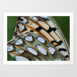 Fritillary Wings Art Print