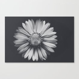 Daisy in the darkness Canvas Print