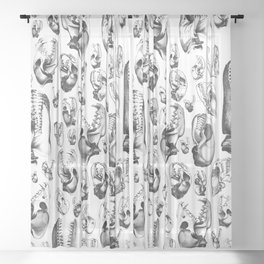 Carnivore B&W Sheer Curtain