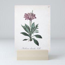 Flower scabiosa lucida1 Mini Art Print
