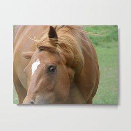Shake it Off Horse Metal Print