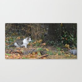 The Cat and the Squirrel Canvas Print