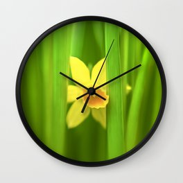 Single Daffodil Peeking Through the Leaves Wall Clock