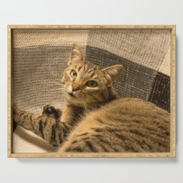 Cat on a chair Serving Tray