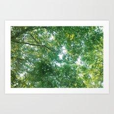 forest 012 Art Print