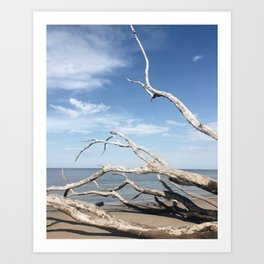 Drifting / Big Talbot Island, Florida Art Print