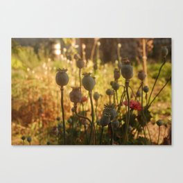 In Good Company Canvas Print