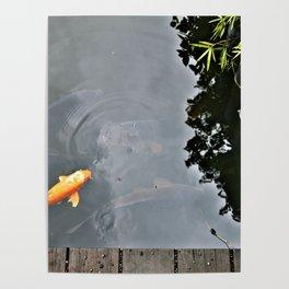 Koi Astound Poster
