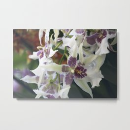 Longwood Gardens Orchid Extravaganza 75 Metal Print