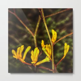 Yellow Kangaroo Paw flower against a blurred background Metal Print