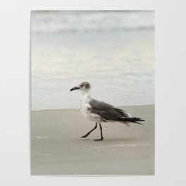 Seagull Stroll Poster