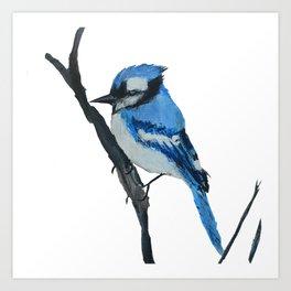Blue Jay Wild Bird Acrylic On Canvas Board Art Print