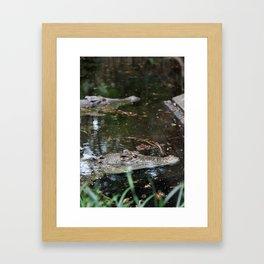 Crocodiles Framed Art Print