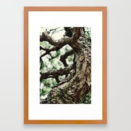 Bonzai Baby Framed Art Print