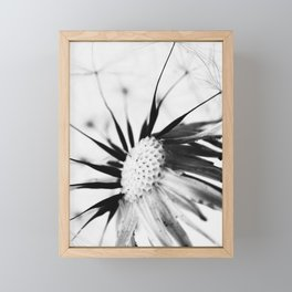 Dandelion BW Framed Mini Art Print