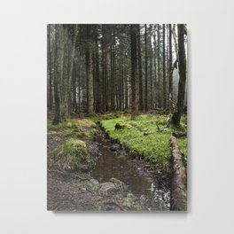 Scolty Woods - Nydoa Photography Metal Print