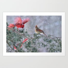 Cardinals Jostling on a Branch in a Snow Storm Art Print