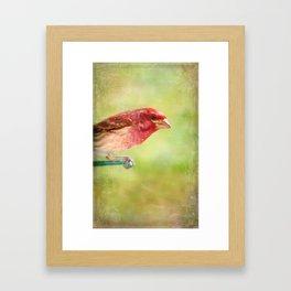 Purple Finch Framed Art Print