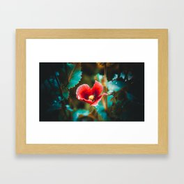 Red poppy flower, close-up Framed Art Print