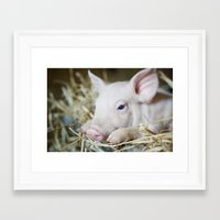 piglet Framed Art Prints featuring Piglet by Ruta Dok