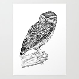 Little  owl Art Print