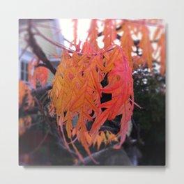 orange fingers Metal Print