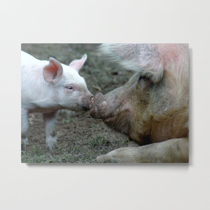 Piggy Love Metal Print