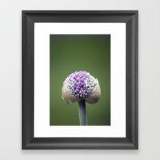 Starting Allium Framed Art Print