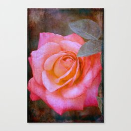 Rose 289 Canvas Print