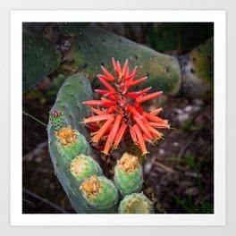 Cactus-Wrapped Flaming Firecraker Flower Art Print