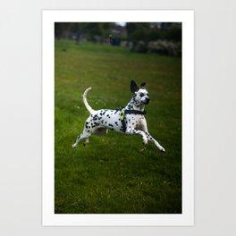 Flying Crazy Dog. Kokkie. Dalmatian Art Print