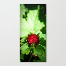 Wild Berry Canvas Print