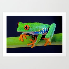 TREE FROG ON BAMBOO Art Print