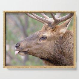 Watercolor Elk Bull 10, The Jokester Serving Tray
