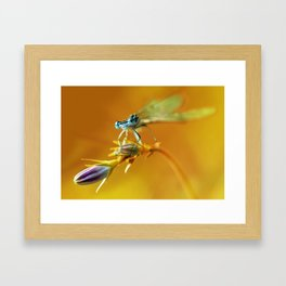Morning impresion with blue dragonfly Framed Art Print