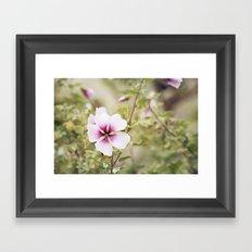 Solo Bloom Framed Art Print