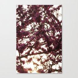 Magenta Canvas Print