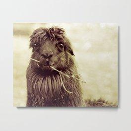 Hello Llama Metal Print