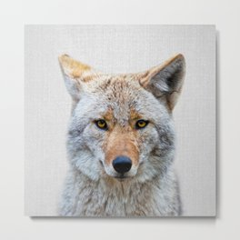 Coyote - Colorful Metal Print