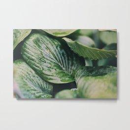 Garden Greens 2 Metal Print