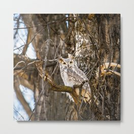 Feathered 15 Metal Print