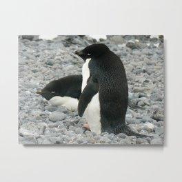 Adelie Penguins, Antarctica 2006 Metal Print