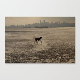 Dog playing at the beach, Vancouver, Canada landscape Canvas Print